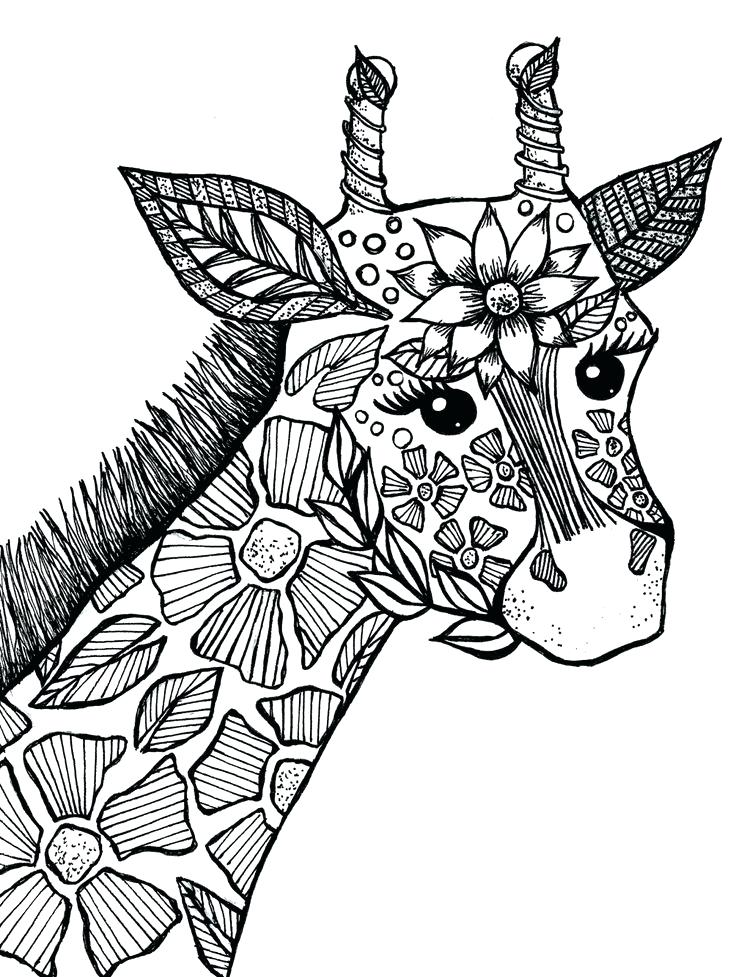 736x977 Adult Coloring Pages Animals