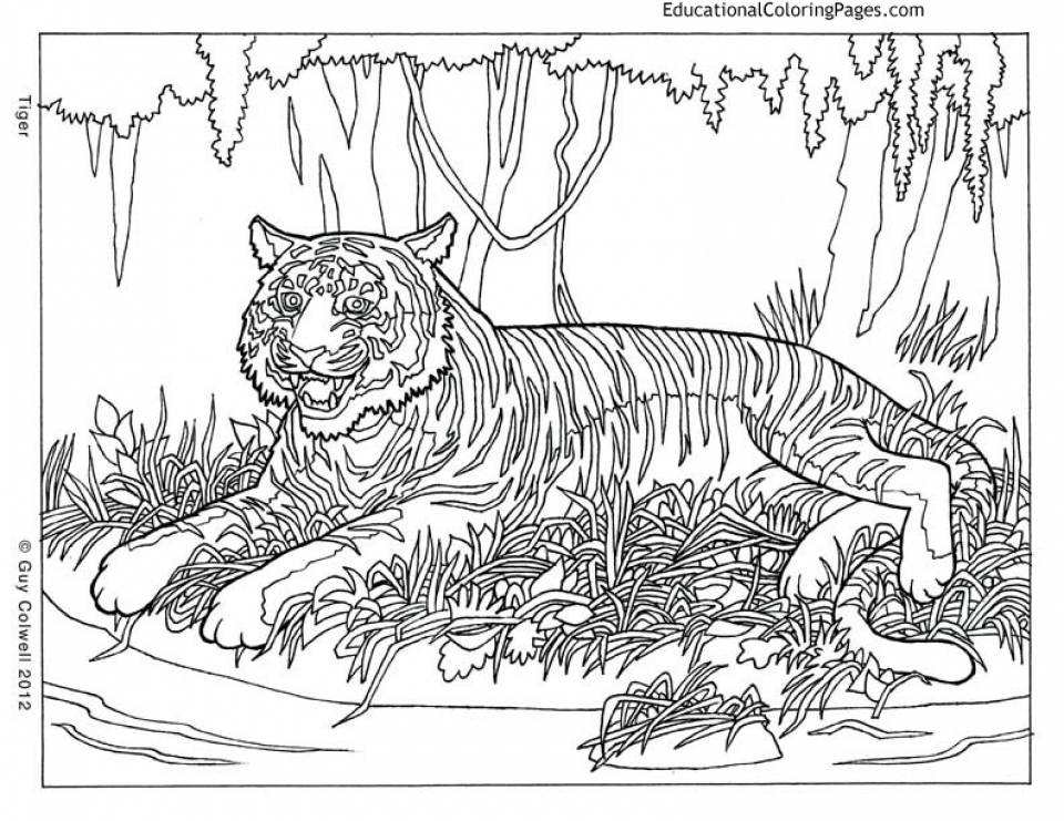 960x741 Wildlife Coloring Pages For Adults Get This Printable Difficult