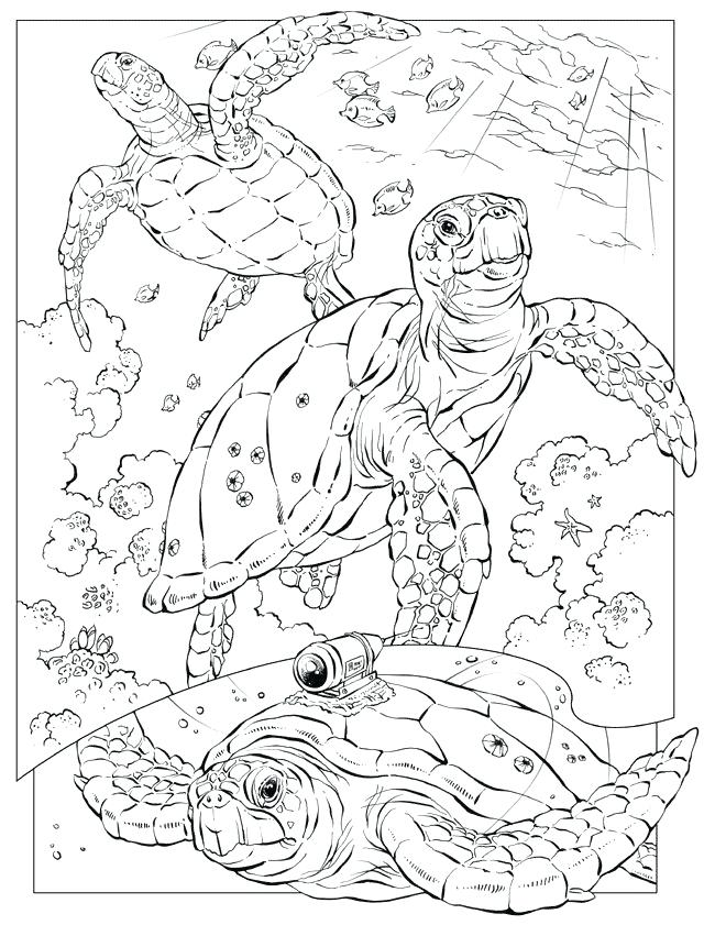 650x841 Animal Coloring Pages Free Animal Coloring Pages For Adults This
