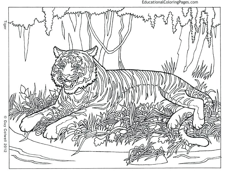792x612 Animal Coloring Pages Pattern Animal Coloring Pages Preschool