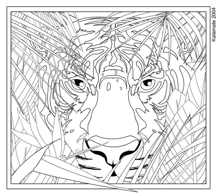 Animal Coloring Pages For Teenagers