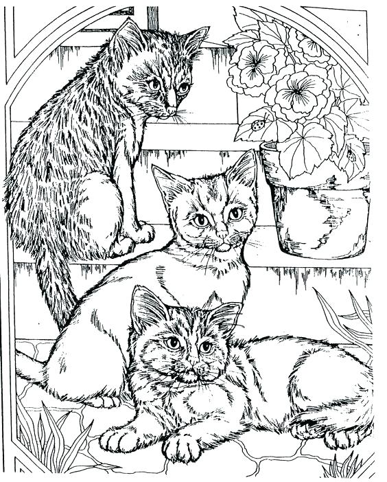 564x702 Coloring Pages Cool Cool Adult Coloring Pages Cool Animal Coloring