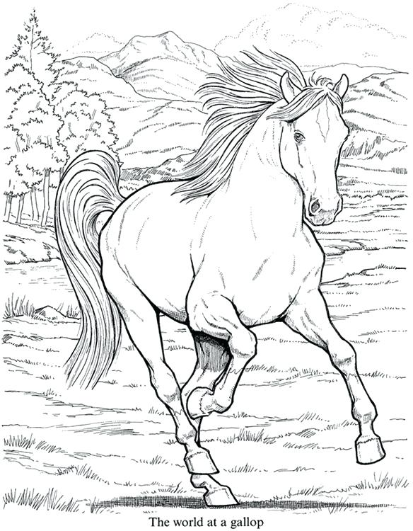584x750 Detailed Animal Coloring Pages Coloring Pages Cool Pictures