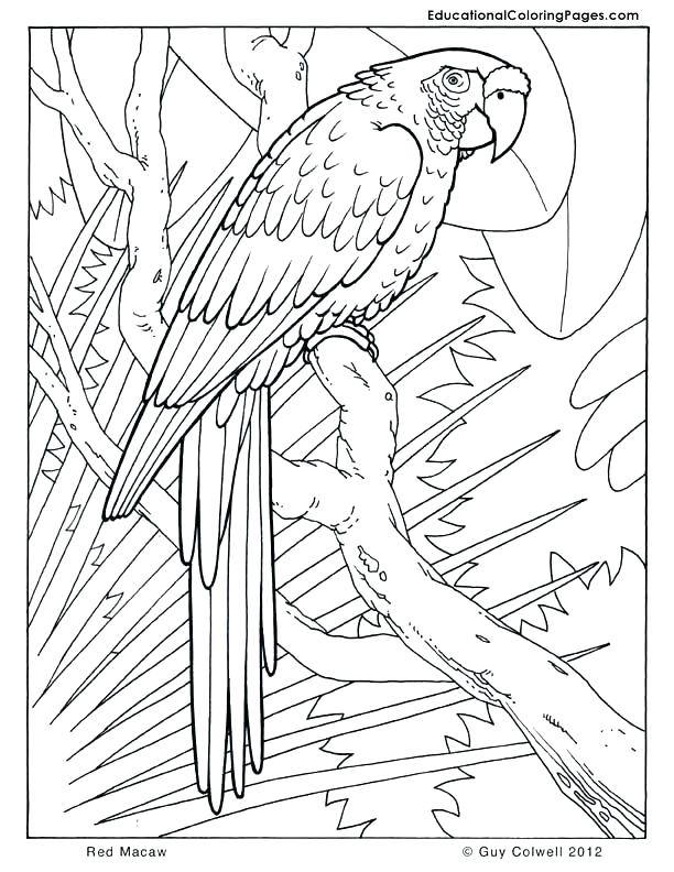 612x792 Safari Animals Coloring Pages Cool Real Animal Coloring Pages