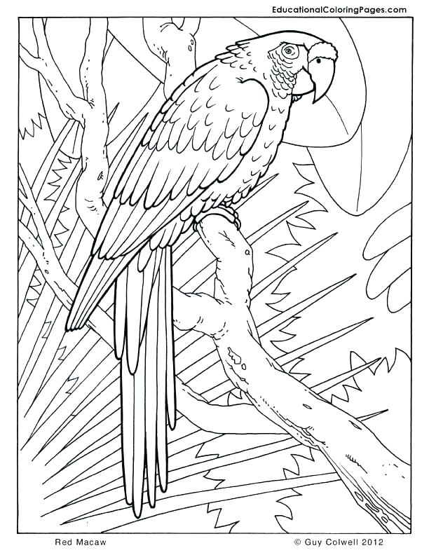 612x792 Cool Coloring Sheets For Teenagers Animal Coloring Pages For Teens