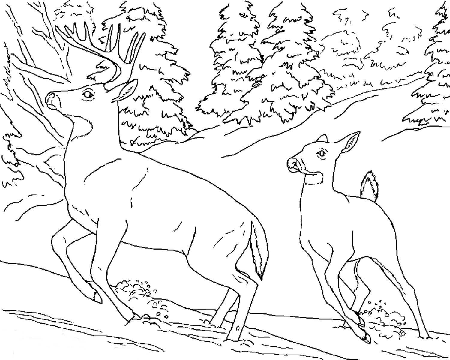 1500x1200 Animal Coloring Pages To Print Realistic Deer Animal Coloring