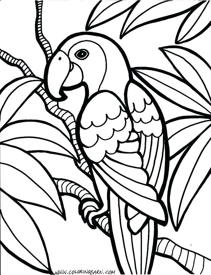736x957 Animals Coloring Pages Toddlers Animal Coloring Pages