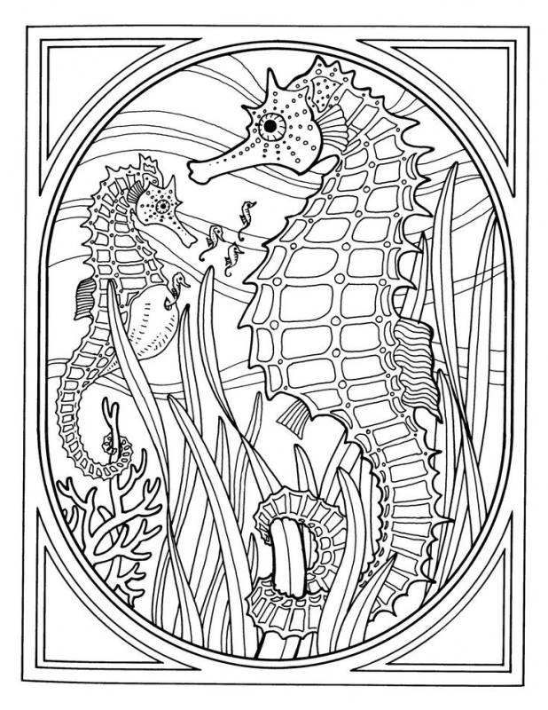 618x800 Detailed Realistic Seahorse Hard Coloring Pages For Grown Ups