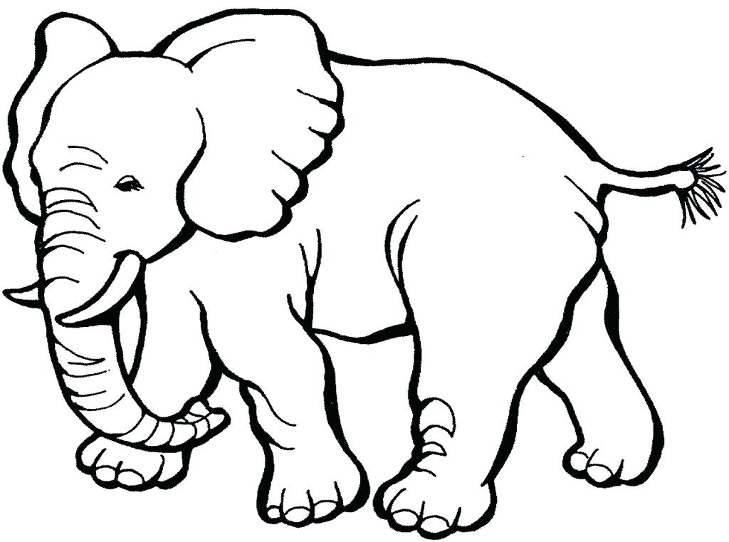 1024x761 Baby Animals Coloring Pages