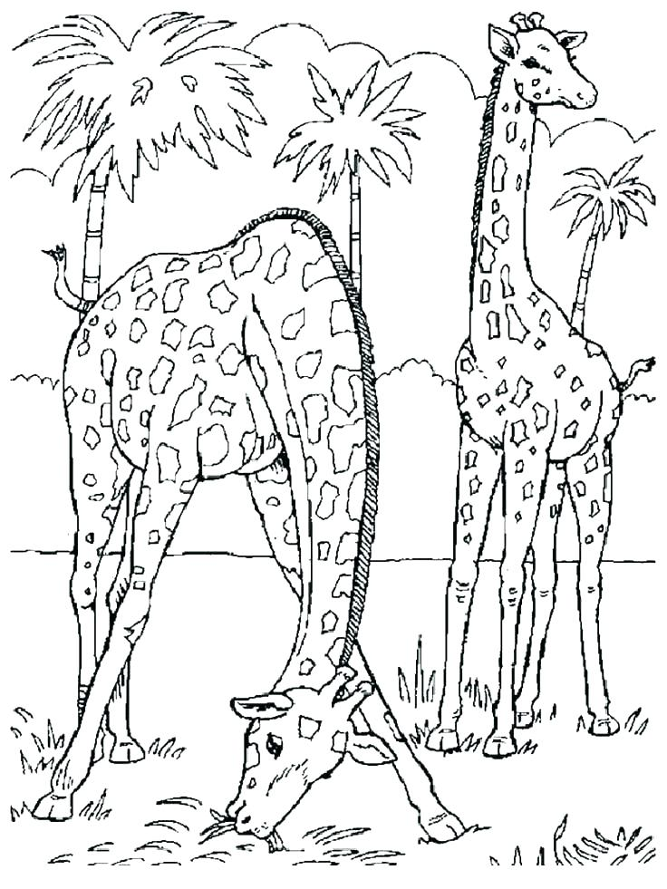 736x981 Realistic Animal Coloring Pages With Realistic Animal Coloring