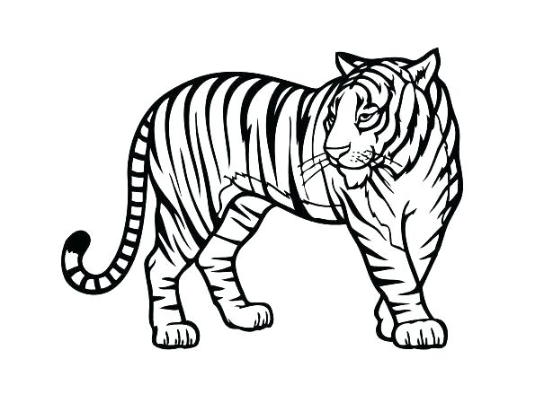 615x439 Coloring Pages And Coloring Books Printable Jungle Animal