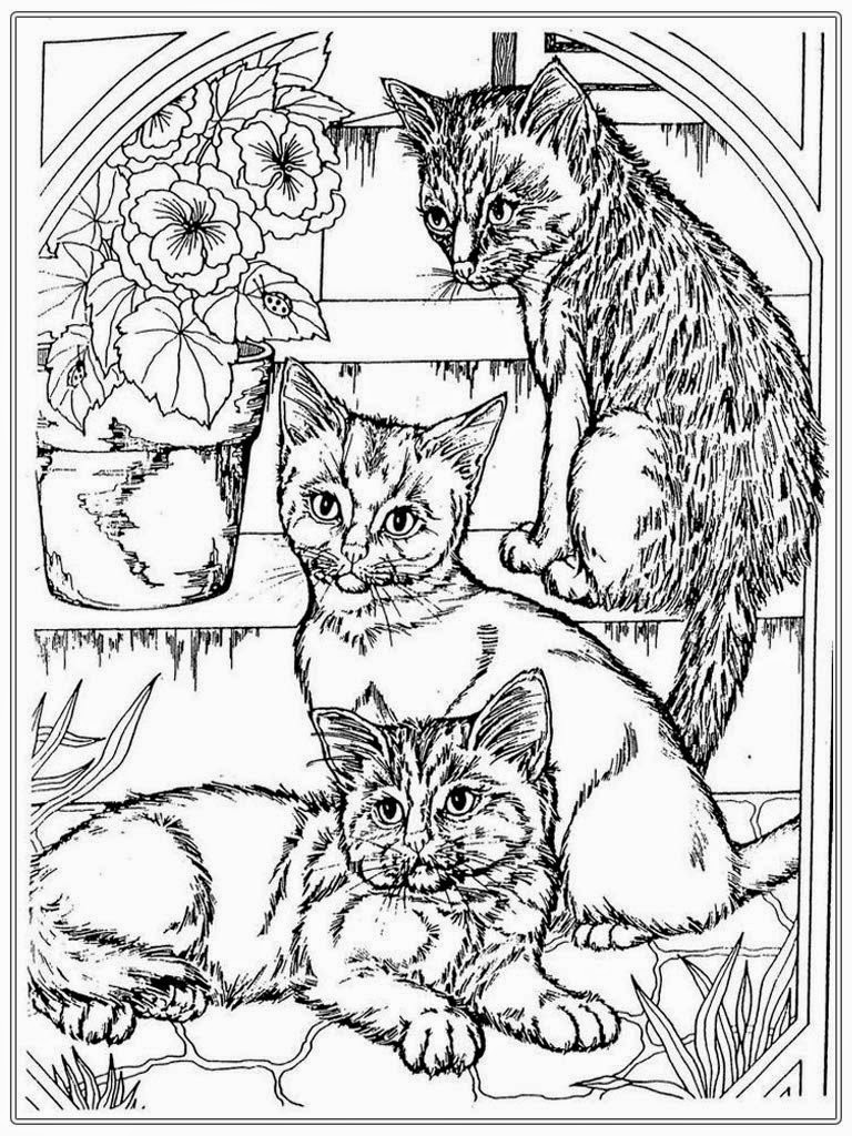 768x1024 Cat Coloring Pages For Adults