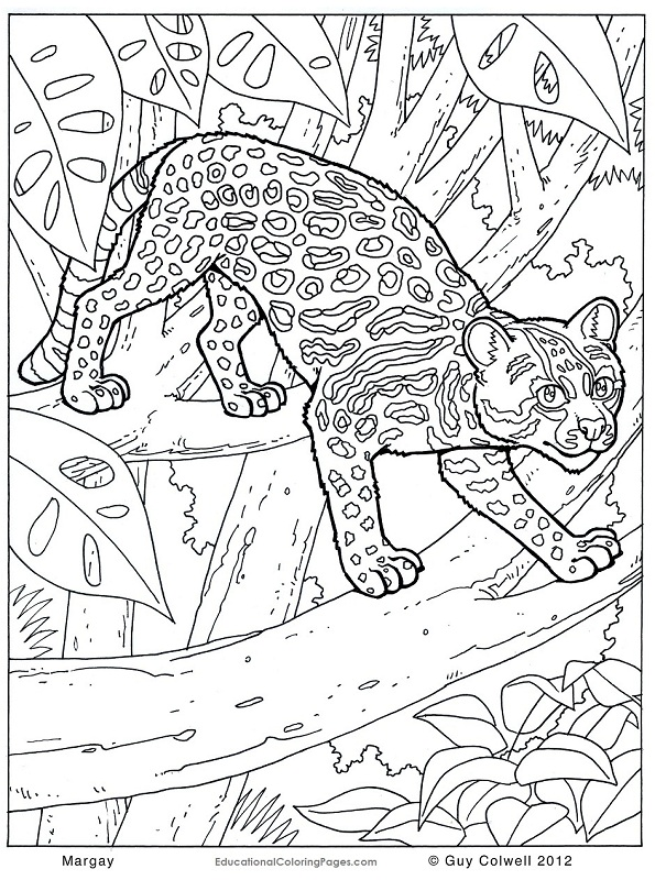 595x800 Safari Animals Coloring Pages