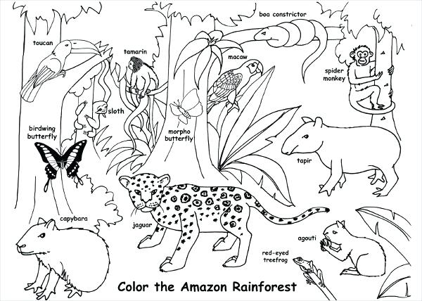 Animal Habitat Coloring Pages