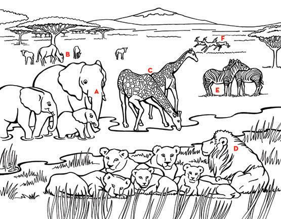 Animal Habitat Coloring Pages At Getdrawings Free Download