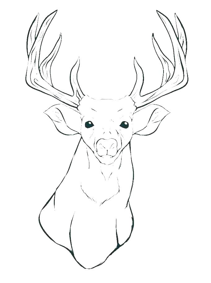 680x911 Coloring Pages For Kids Of Animals Funny Animal Coloring Pages