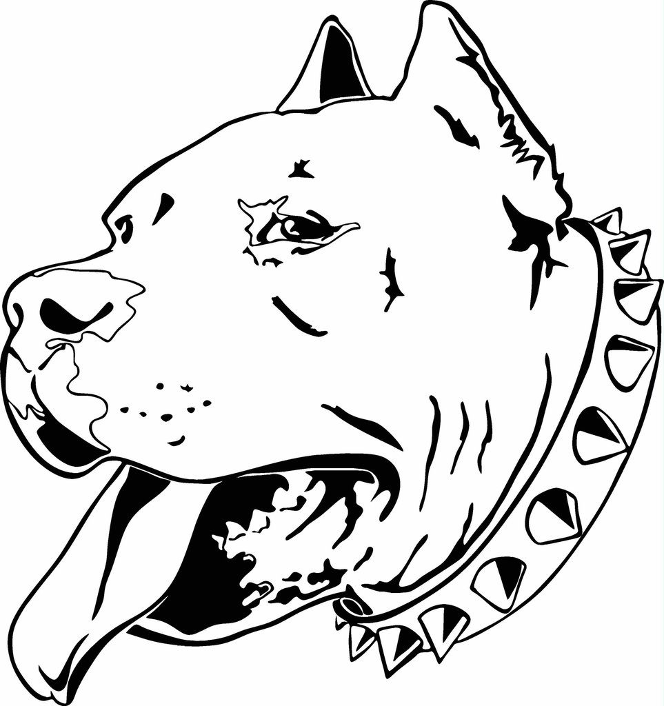 963x1024 Head Pitbull Coloring Page