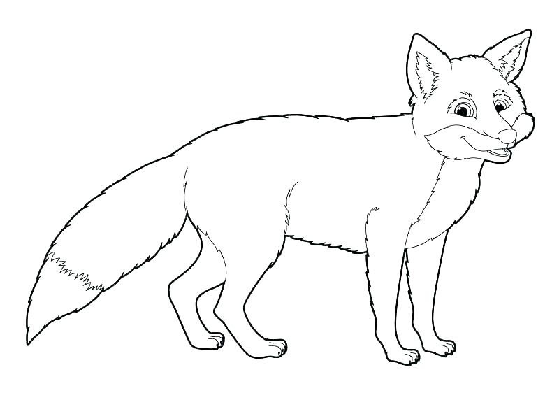 800x572 Arctic Coloring Pages Arctic Fox Coloring Page Arctic Fox Animal