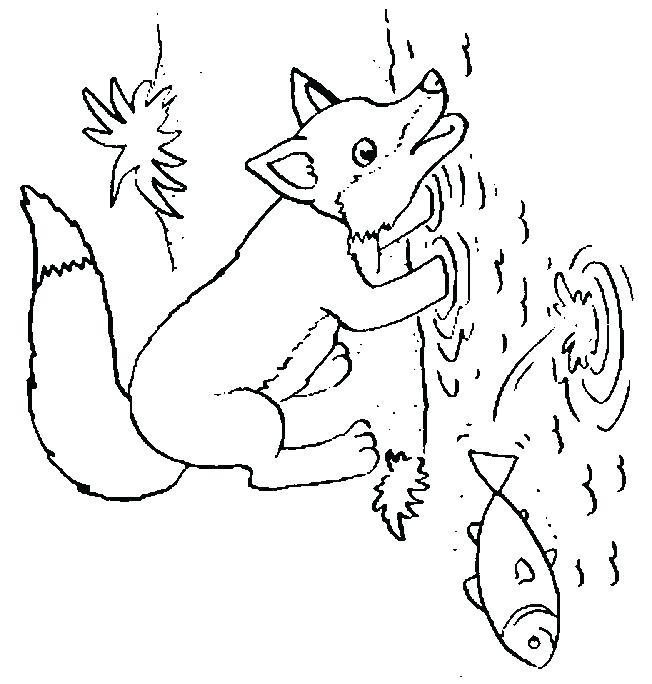 652x684 Arctic Fox Coloring Page Arctic Animal Arctic Fox Coloring Page