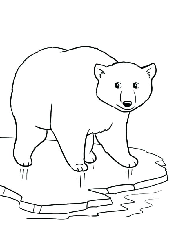 600x777 Arctic Fox Coloring Page Arctic Animals Coloring Pages Arctic