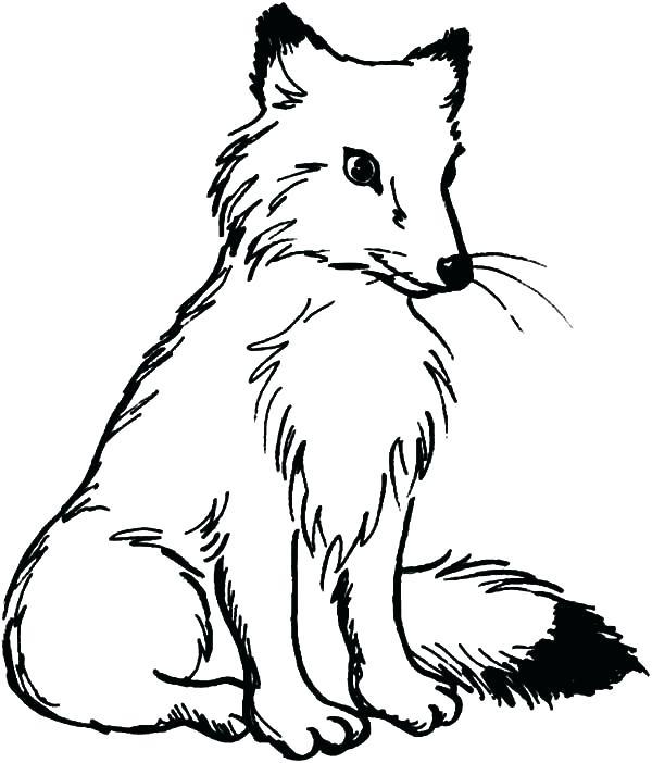 600x702 Arctic Fox Coloring Page Polar Fox Coloring Page Pencil