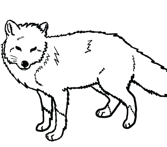 678x600 Fox Coloring Pages Fox Coloring Pages To Print Arctic Fox Coloring