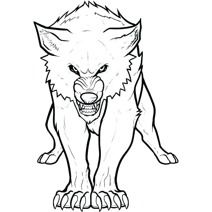 736x736 Arctic Fox Coloring Page Arctic Coloring Pages Coloring Pictures