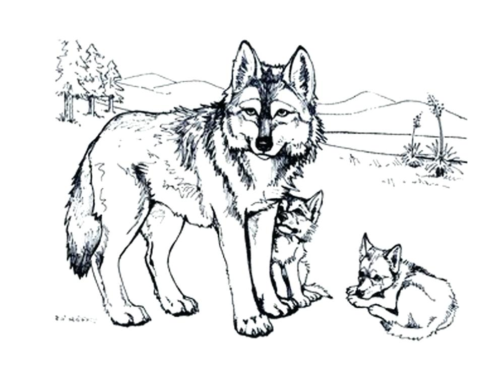 1000x773 Coloring Pages Wolf Realistic Wolf Coloring Pages Free Printable