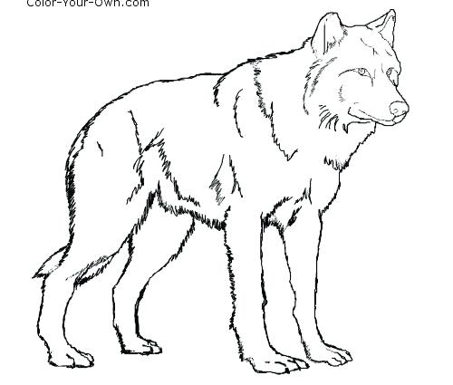 500x425 Animal Jam Arctic Wolf Coloring Page Standing Free Coloring