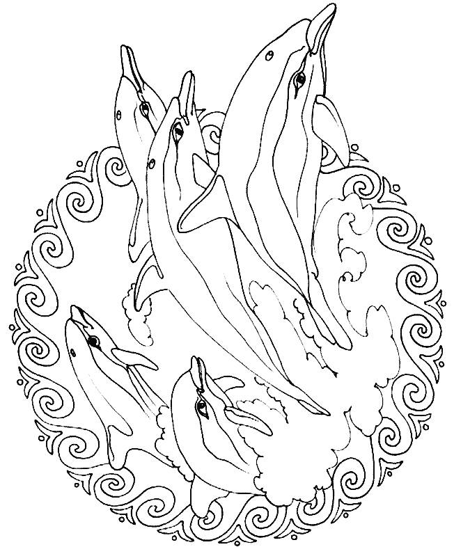 Animal Mandala Coloring Pages At Getdrawings Com Free For Personal