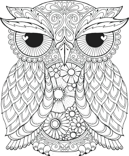 535x645 Free Printable Coloring Book Pages For Adults Or Owl Animal Tier S