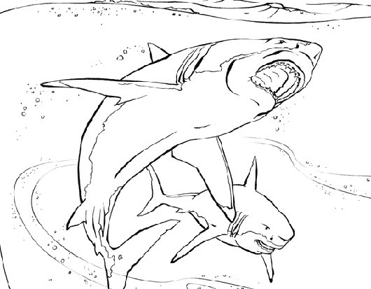 530x413 Animal Planet Coloring Pages Coloring Pages For Boys And Girls