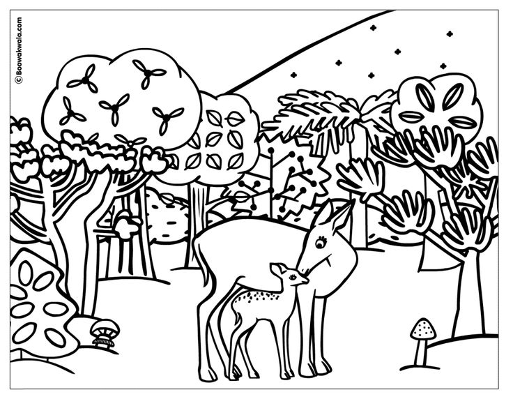 736x572 Animal Planet Coloring Page Free Download
