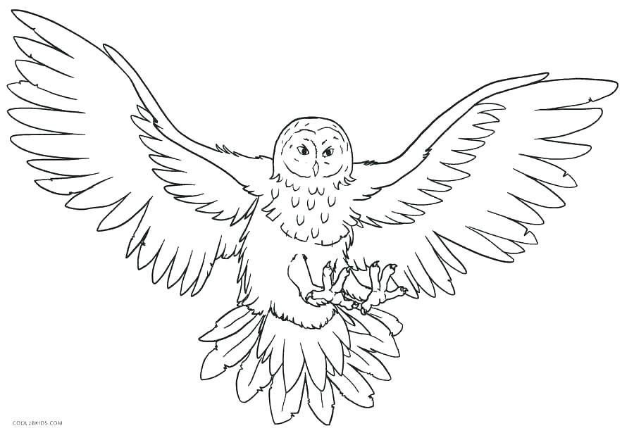 900x615 Animal Planet Coloring Pages Animal Planet Coloring Pages Coloring