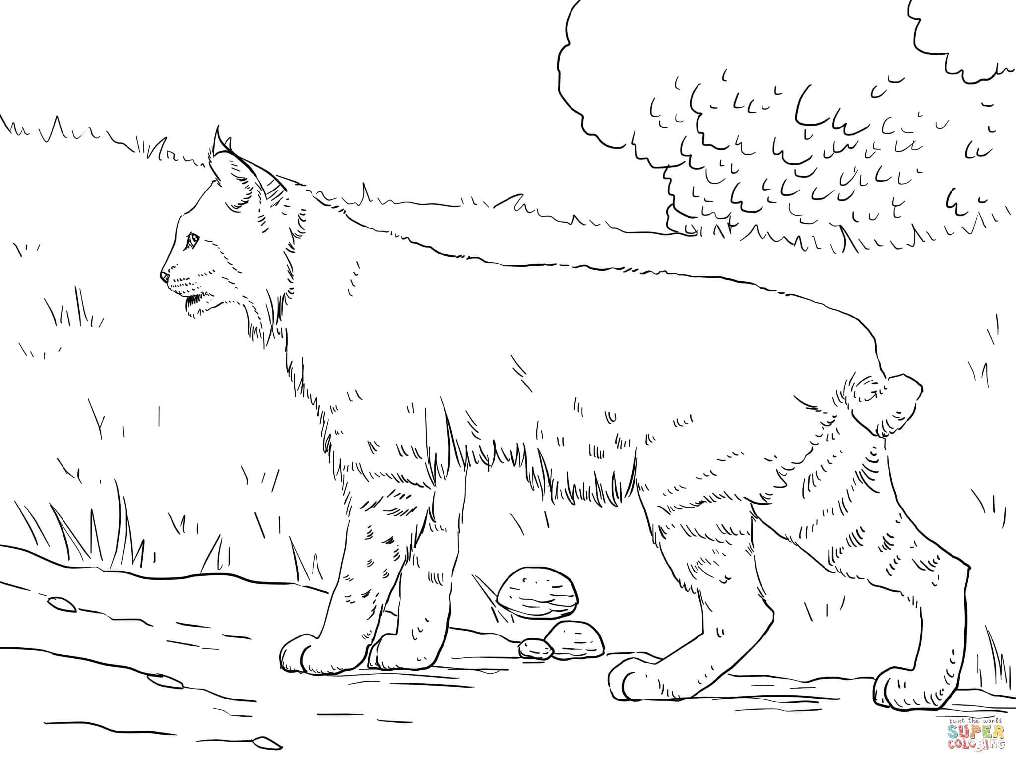 2048x1536 Coloring Pages Of Animal Footprints Best New Bobcat