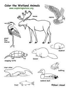 236x305 Forest Animals Coloring Page