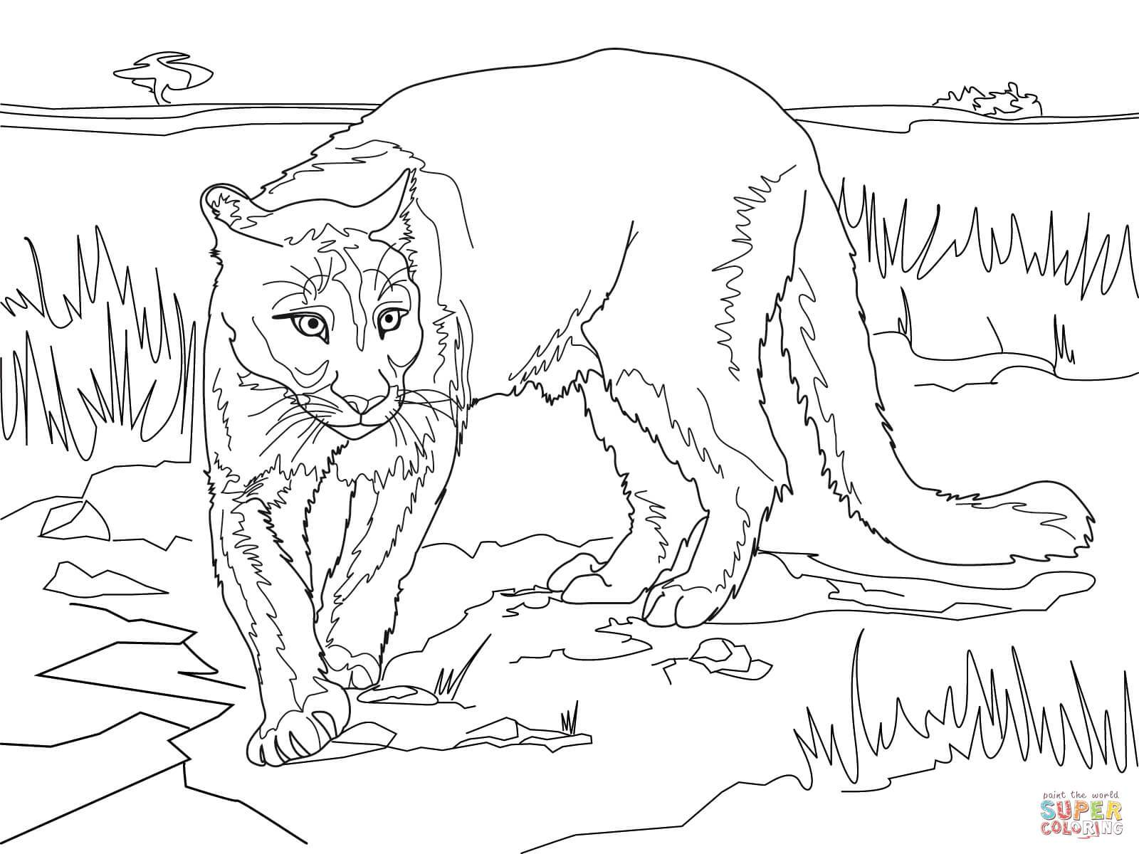 1600x1200 Incredible Rocky Mountain Elk Coloring Page Printable For Animal