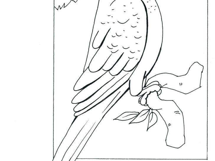 728x546 Parrot Coloring Pages Free Printable Drawing Of A Photos