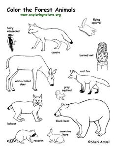 236x305 Animal Tracks Coloring Page Outdoor Activities Nature Crafts