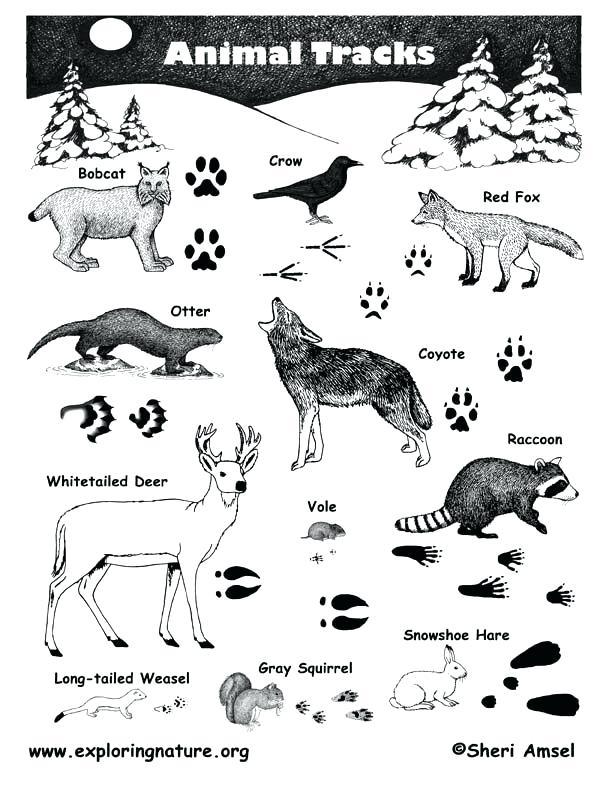 612x792 Printable Printable Animal Track Identification Guide