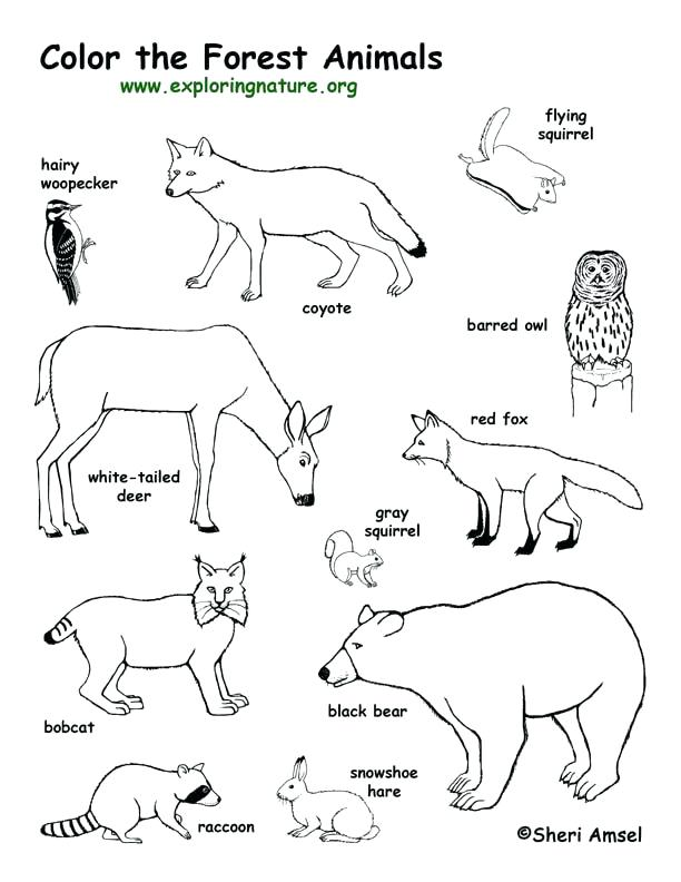 612x792 Animal Tracks Coloring Pages Animal Footprint Coloring Pages