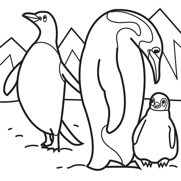 600x600 Arctic Animals Coloring Pages Advanced Coloring Pages, Difficult