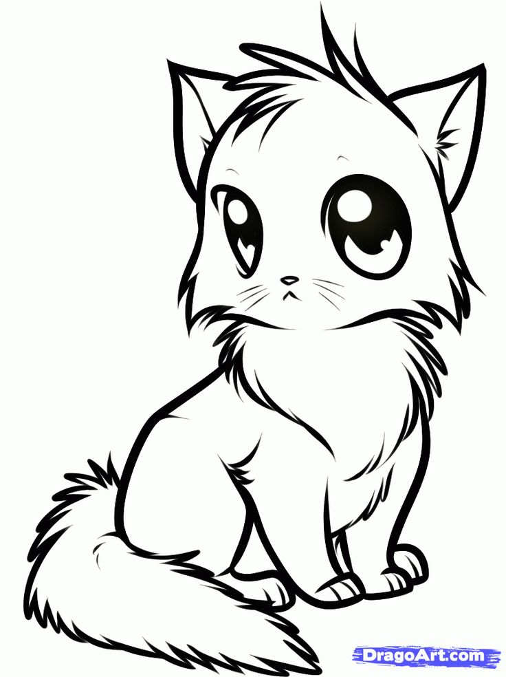 736x984 Anime Cat Coloring Page Timykids