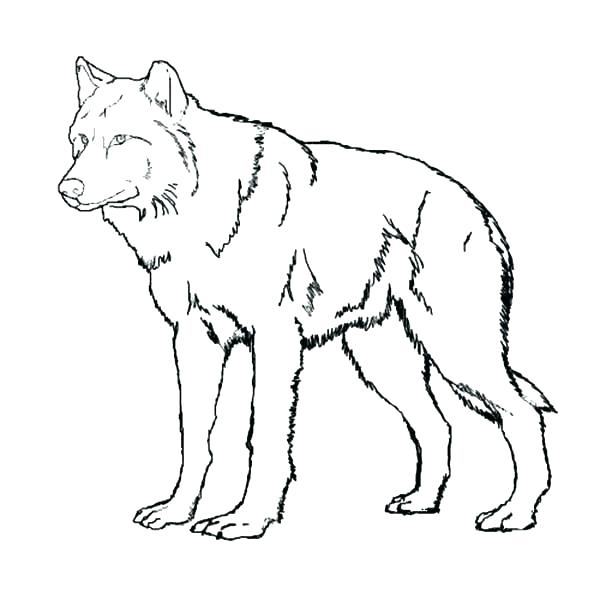 600x600 Cute Baby Wolves Coloring Pages Wolf Page Printable Sheets Sapia