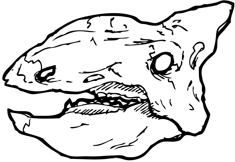 1000x689 Ankylosaurus Skull Coloring Page
