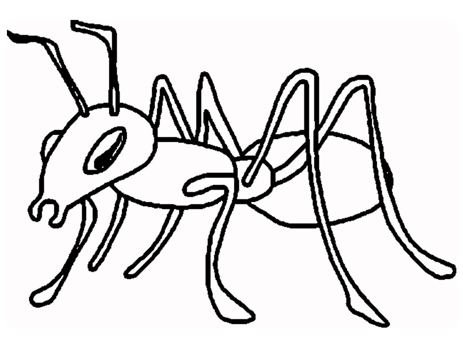 1600x1200 Ant Coloring Page Ant Cartoon And Printable Ants Coloring Pages