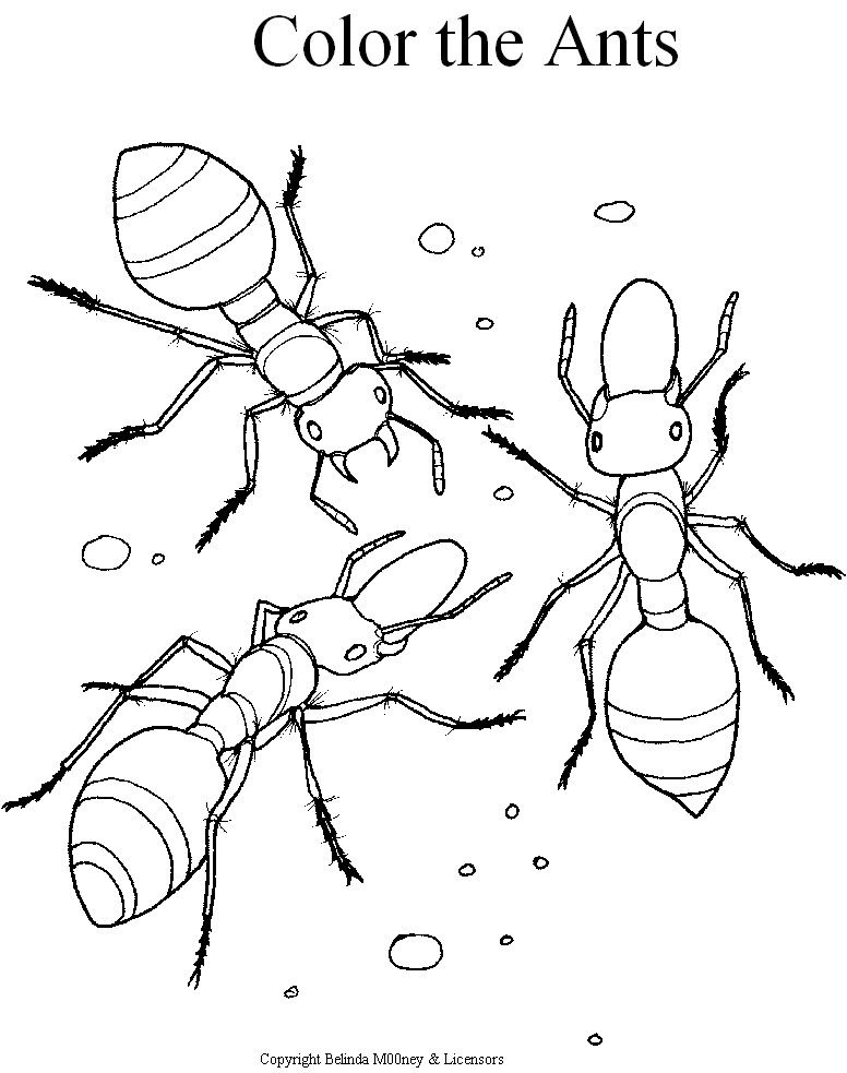 776x983 Ant Coloring Pages Printable For Kids Preschool Ant