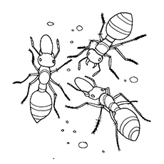 230x230 Marvelous Idea Ant Coloring Pages Ant