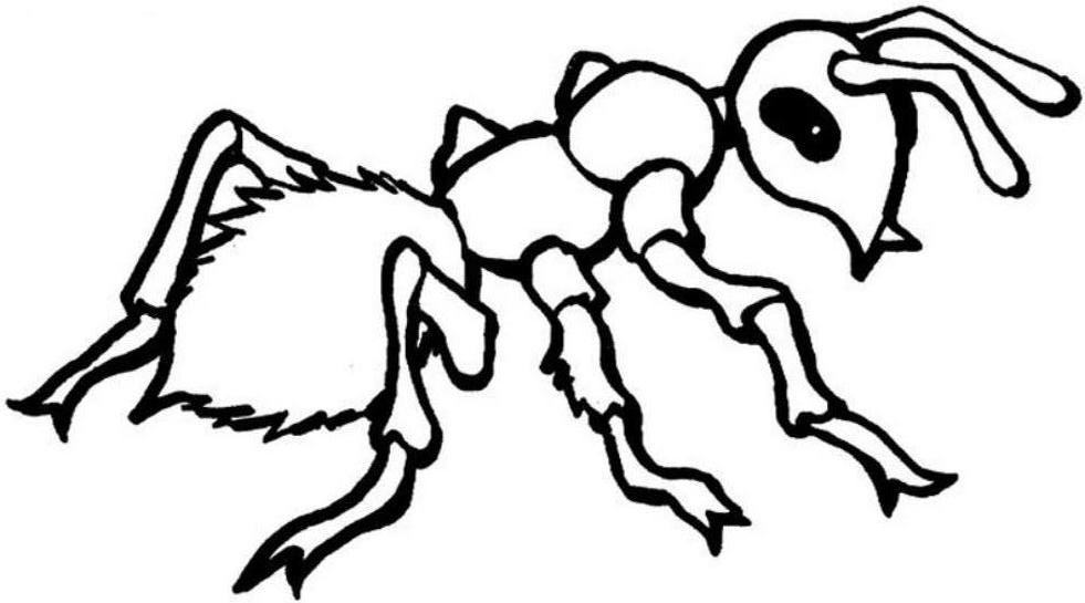 981x545 Ant Coloring Page Free Printable Ant Coloring Pages For Kids Ideas