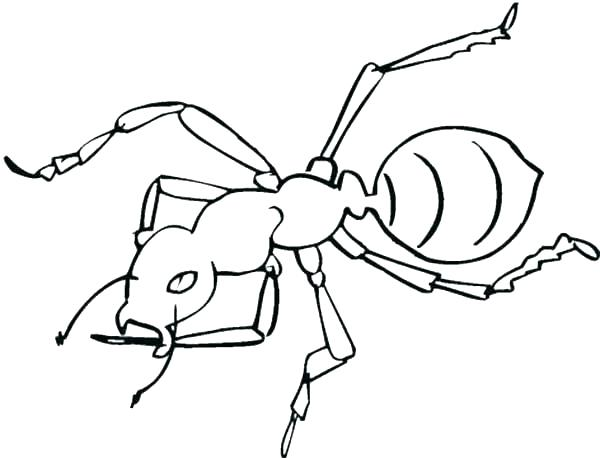 600x458 Ant Coloring Page Anteater Coloring Page Ant Coloring Page Ant